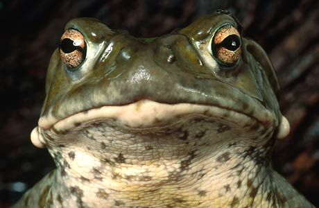 the death of a toad by Dive deep into richard wilbur's the death of a toad with extended analysis,  commentary, and discussion.
