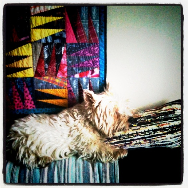 Dear old Flossie in saturate tones with my Kaffe Fassett quilt